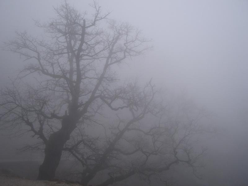 Сон, Туман